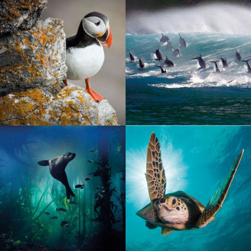 BBC Earth Greetings Cards - Gift Pack