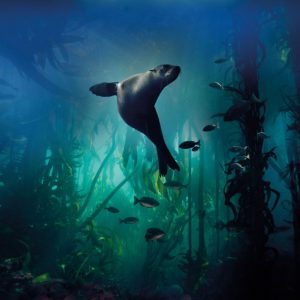 Galapagos Sea Lion - BBC Earth Greetings Card