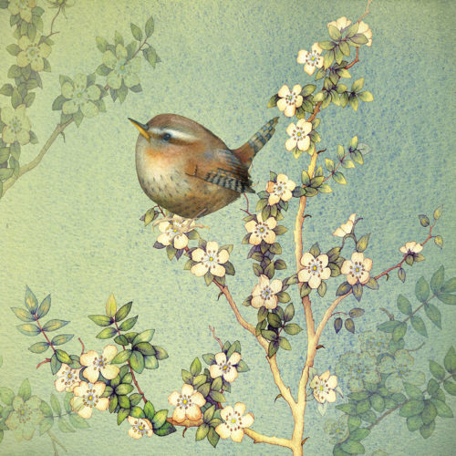 Tiny Wren Greetings Card